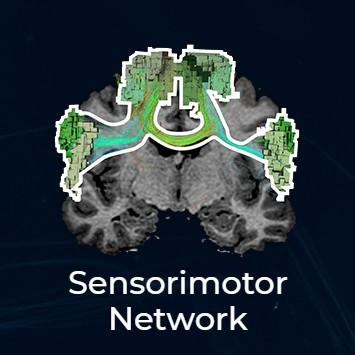 sensorimotor thumbnail